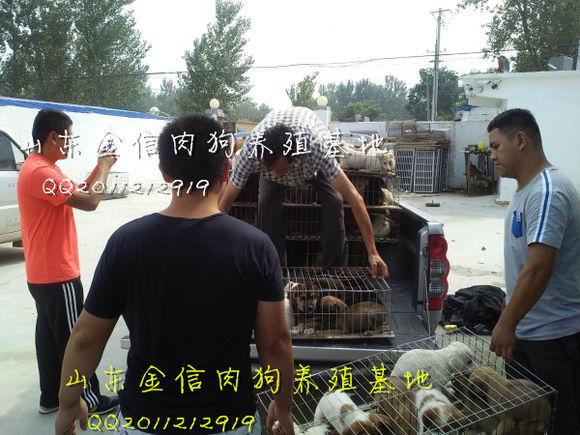 肉狗养殖基地